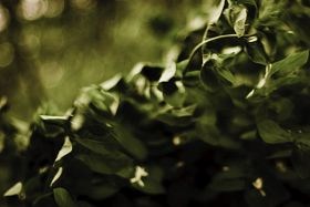 green-leaves-blowing