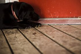 Black Dog, Red Door